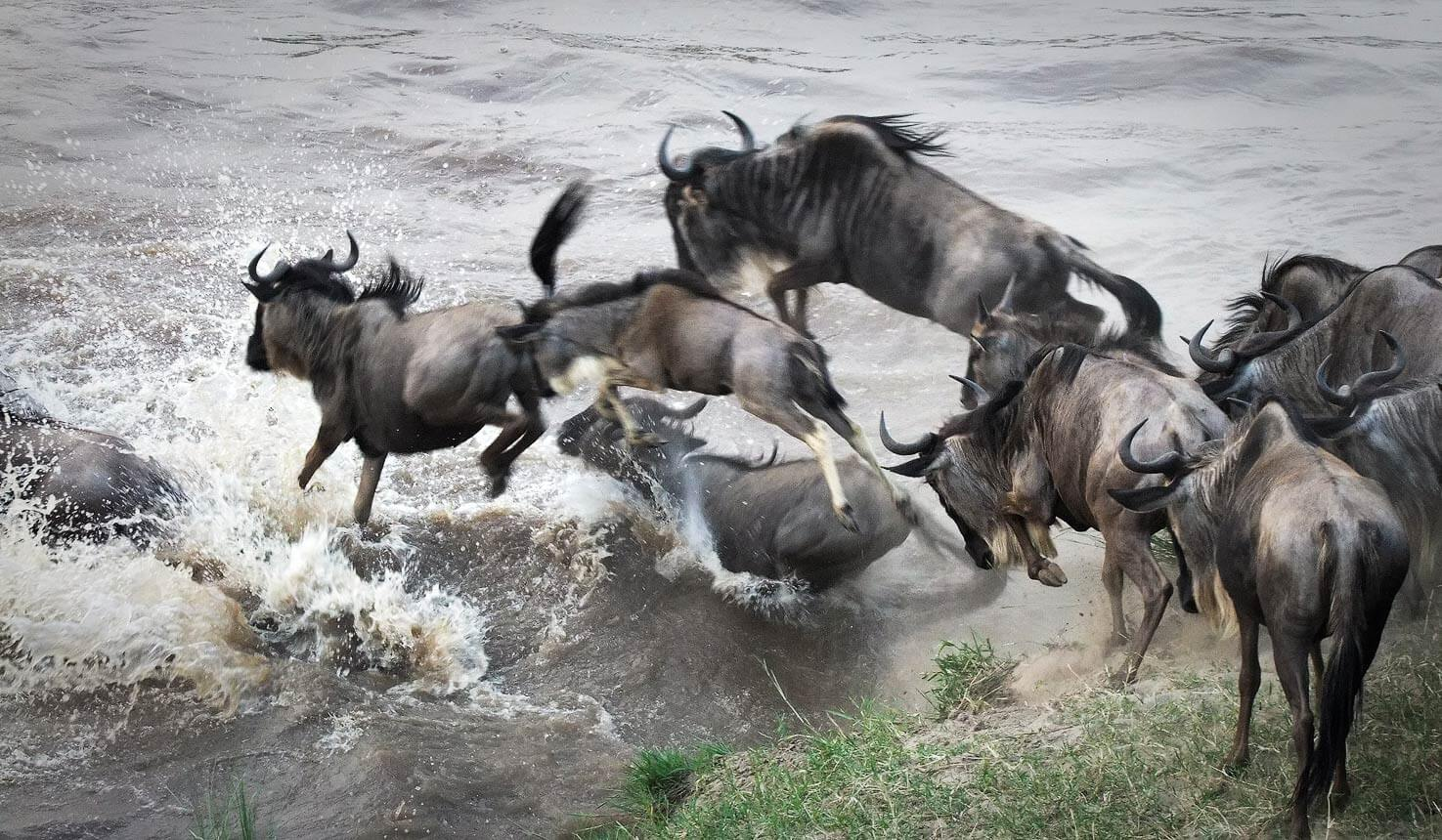 Wildbeest Migration Safari