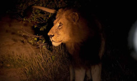 night-vehicle-safari-kenya
