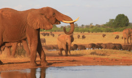 03 days Tsavo Safari