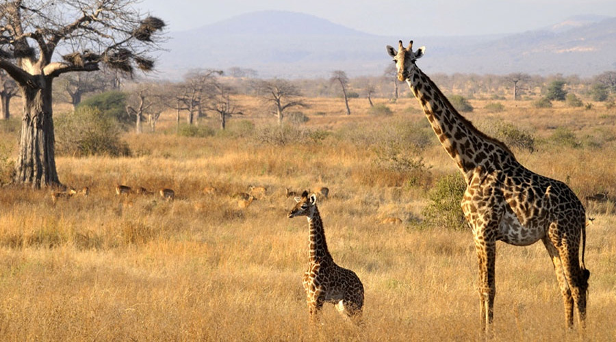 07 days -Tanzania Safari
