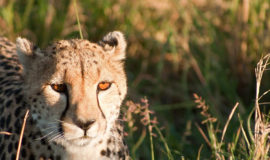 maasai mara flying package
