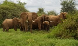 Kenya beach tour and wildlife safari