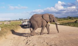 Masai Mara Amboseli Safari -Flying package